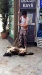 SOKAK KÖPEĞİ - (Özel) Temizlik İşçisinden Köpeğe Masaj
