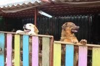 ÇOCUK ESİRGEME KURUMU - Portekiz'den Yedikule Hayvan Barınağı'na Gönüllü Yolculuk