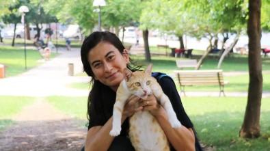 Sokaktaki Kedileri Besleyen Öğretmeni 'Gösteriş İçin Yapıyorsun' Diyerek Darp Ettiler