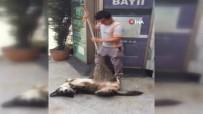 SOKAK KÖPEĞİ - Temizlik İşçisinden Köpeğe Masaj