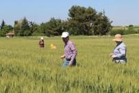 Kırklareli'de Süne İle Mücadele Çalışmaları