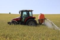 200 Bin Dekarlık Tarım Arazisinde 'Süne' Mücadelesi