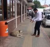 Belediye Personelinin Nezaketi, Sokak Köpeğini Yerinde Etti