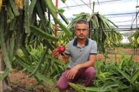 Ejder Meyvesi Çiftçinin Yeni Geçim Kaynağı Oldu