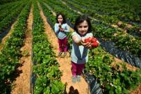 BÜYÜKŞEHİR YASASI - Konya'da 2020 Yılı Tarımsal Destekleme Başvuruları Başladı