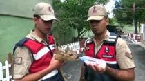 Yaralı Karaca Yavrusuna Jandarma Sahip Çıktı