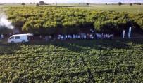 Fasulye Para Edince Çiftçiler Tarlada Mangal Sefâsı Yaptı