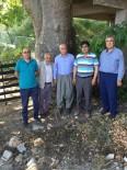 GÜZERGAH - Muhtar, 500 Yaşındaki Çınar Ağacının Anıt Ağaç Olarak Tescillenmesini İstiyor