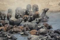 (Özel) Burası Güney Afrika Değil Balıkesir Ovası