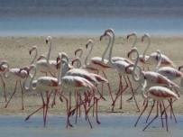 Seyfe Gölü'nde Kuş Çeşitliliği Yaşanıyor