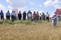 Yeni Buğday Çeşitleri 'Mesut' Ve 'Reis' İçin Tarla Günü Düzenlendi