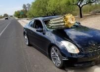ARIZONA - Arizona'da Otomobil Kaktüse Daldı