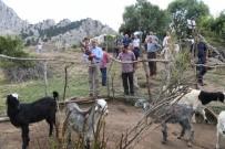 KONYAALTI BELEDİYESİ - Başkan Esen'den Hayvancılığa Destek  Sözü
