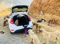 Fedakar Öğretmen Köpekleri İçin Tatilden Vazgeçti