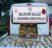 Koruma Altındaki Zambakları Topladı, 60 Bin TL Ceza Yedi
