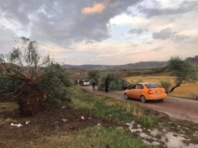 Sungurlu'da Fırtına Ağaçları Kökünden Söktü
