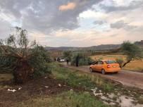 ŞİDDETLİ FIRTINA - Sungurlu'da Fırtına Ağaçları Kökünden Söktü