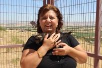 Veteriner İşleri Müdürü Tutcugil;'Hiçbir Zaman Mama Toplama  Talebimiz Olmadı'
