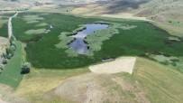 Yok Olma Tehlikesindeki Kaz Gölü Yeniden Hayat Buldu