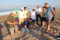 Gönüllü Çevreciler 600 Kafes Yaptırıp Sahilde Caretta Nöbetine Başladı