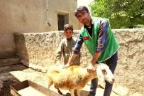 İNSANI YARDıM VAKFı - Yetim Ailelere Canlı Hayvan Desteği