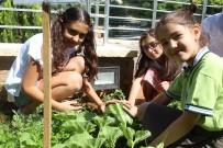 ORGANİK SEBZE - Okul Bahçesinde Organik Sebze Ve Meyve Üretiyorlar