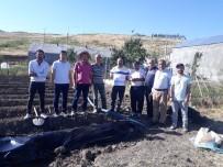 TARıM - Malazgirt'te 'Tarla Günü' Etkinliği