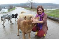 HAYVAN - Başkan Hürriyet, Sokak Hayvanları İçin Harekete Geçti