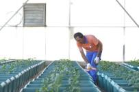 HAFTA SONU - Balkonlar Bahçeye Dönüşecek