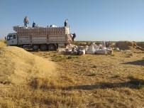 Saman İşçilerinin Kavurucu Sıcaktaki Ekmek Mücadelesi