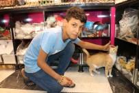 KARAKAYA - Biriktirdiği Harçlığıyla Sokak Kedilerine Et Alıyor