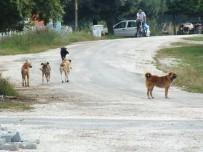 SOKAK KÖPEKLERİ - Köy Sakinleri Sokak Köpeklerinden Dertli