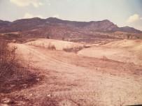 Elmalı'da 20 Yıl Önce Yanan Orman Yeniden Canlandı