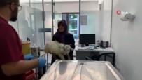 Bacağı Kırılan Keçisini Kucağında Kliniğe Getirdi