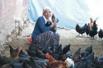 TAVUK ÇİFTLİĞİ - Geçinmek İçin Başladığı İşi Büyüten Kadının Hedefi Tavuk Çiftliği Sahibi Olmak