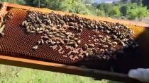 FEN EDEBİYAT FAKÜLTESİ - 'Küçük Mucize İşçiler' Tarıma Da Hizmet Ediyor