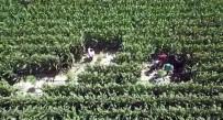 Mısır Tarlalarına 'Drone'lu Kenevir Operasyonu Açıklaması 8 Gözaltı