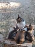 Yavru Köpeği Kedi Sahiplendi