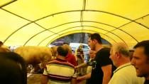 Beykoz'daki 'Kurbankent'te Hareketlilik