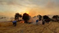 Mardin'de Orman Yangını 6 Mahalleyi Tehdit Ediyor