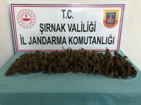 Şırnak'ta 3 Kilo 702 Gram Esrar Ele Geçirildi