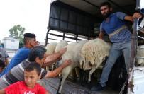 Adana'da Kurbanlıklar Satışa Çıktı