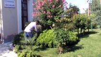 Çevreci İmam Cami Avlusunu Botanik Bahçesine Çevirdi