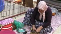 FINDIK TOPLAMA - Mevsimlik Tarım İşçileri Fındık Hasadından Umutlu