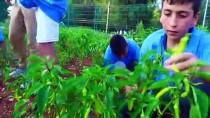 Teknoloji Bağımlılığından Kurtulup Tarımsal Üretim Yapıyorlar