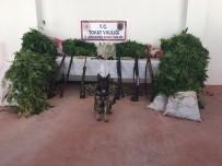Tokat'ta Mısır Tarlasında Kenevir Operasyonu