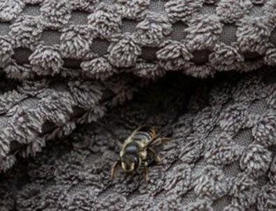 İngiltere'de 'Türk arıyı yakalayın' alarmı