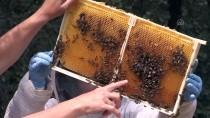 TARIM İLACI - 'Tarım İlaçları, Arıların Çiçek Tercihini Değiştirebiliyor'