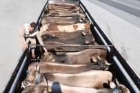 Yozgat'ta Kurbanlık Hayvan Sevkiyatına Sıkı Denetim