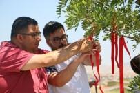Dilek Ağacı - ZİÇEV'li Öğrenciler 'Sevgi Dileği Ağacı'nda Umutlarını Tazelediler